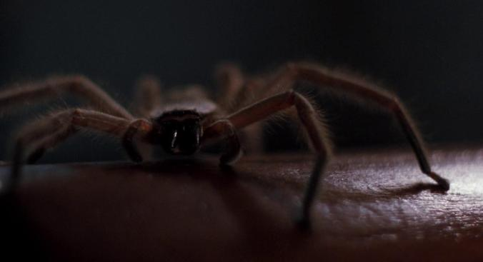 arachnophobia07